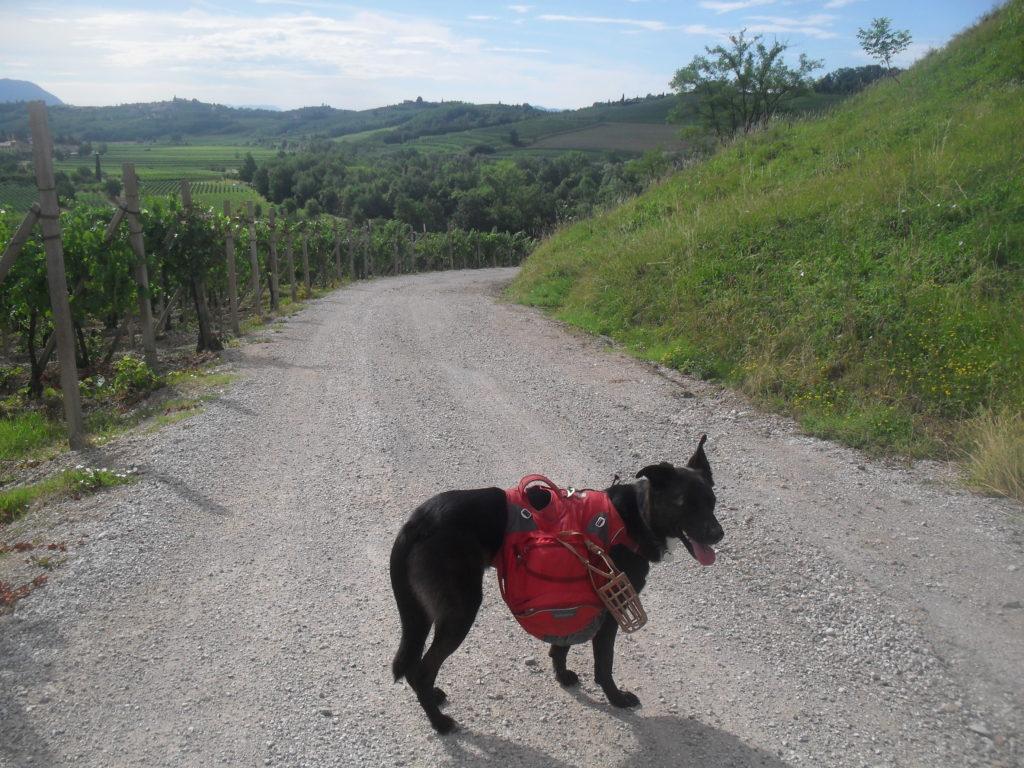 Trekking mit Hund und Rucksack