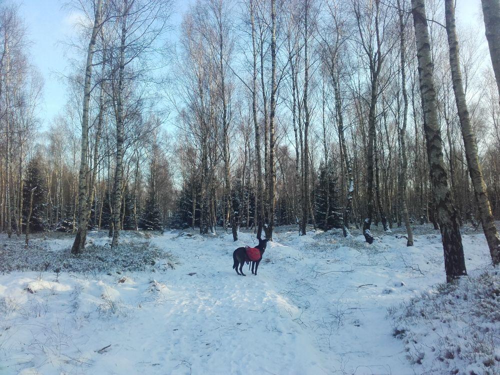 Sonne, Schnee und Hund auf dem Forststeig