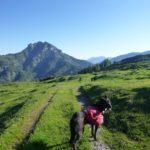 Trekking und (Fern)wandern mit Hund in den Alpen