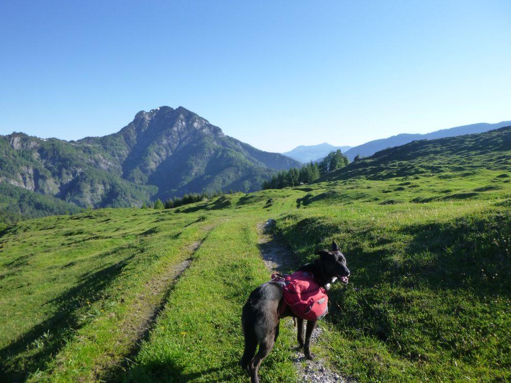 Trekking & (Fern)wandern mit Hund