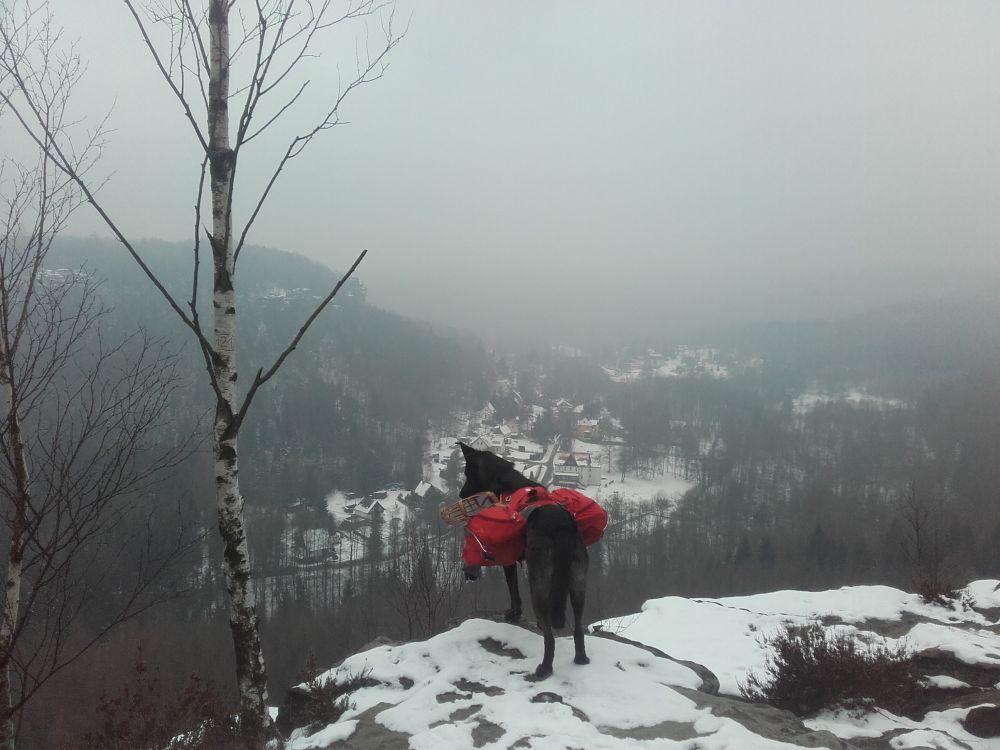 Mit Hund auf dem Forststeig - hier auf dem Schneeberg