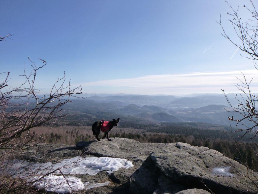 Trekking auf dem Forststeig im Elbsandsteingebirge mit Hund