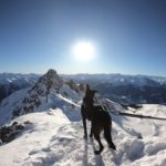 Non Stop Dogwear Free Motion Harness auf dem Pfohner Kreuzjöchl