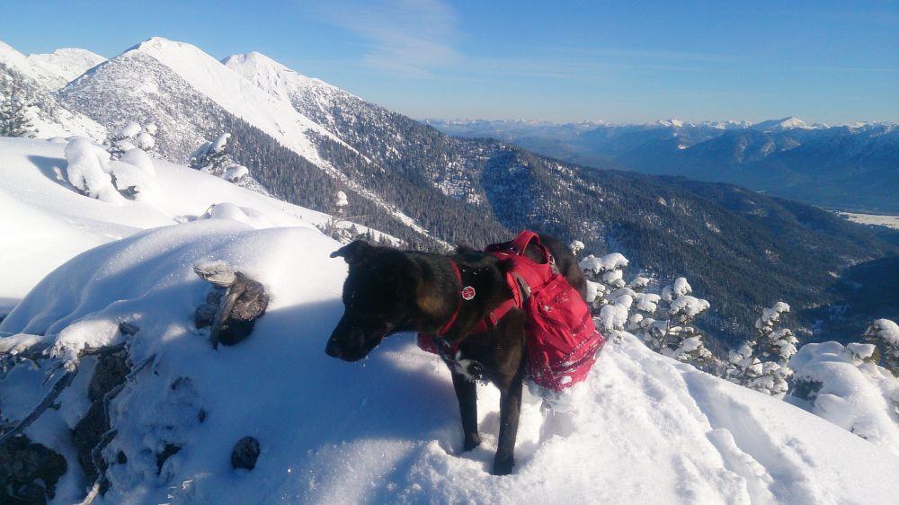 Palisades Pack mit Hund im Schnee
