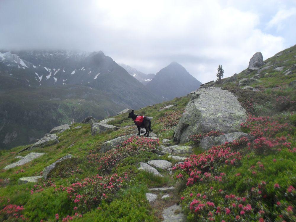 Alpenüberquerung Salzburg – Triest