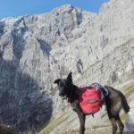 Adlerweg mit Hund - vor den Laliderer Wänden