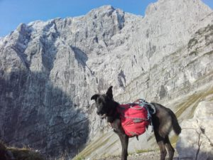 Trekking: Adlerweg in Tirol mit Hund