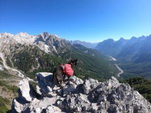 Langzeittest: Ruffwear Palisades Pack – Hunderucksack mit abnehmbaren Taschen