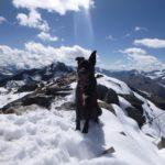 Mexx auf dem Gipfel der Talleitspitze 3406 m