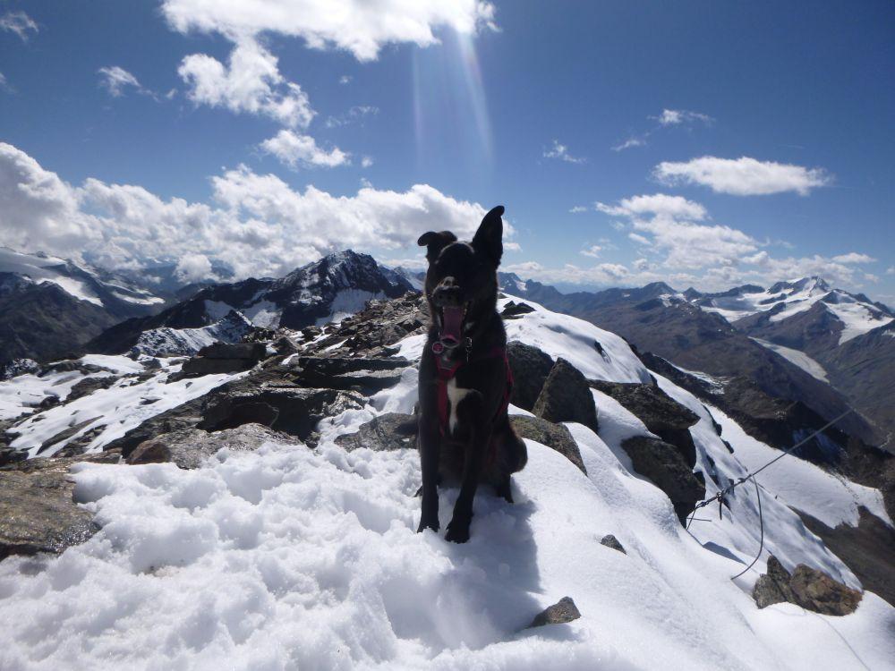 Bergtour mit Hund: Talleitspitze 3406 m