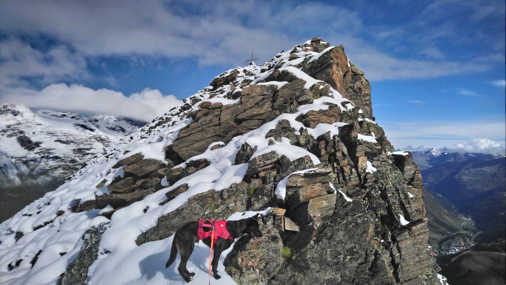 Bergtour mit Hund: Überschreitung Hangerer 3021 m
