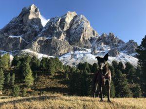 Klettersteig mit Hund