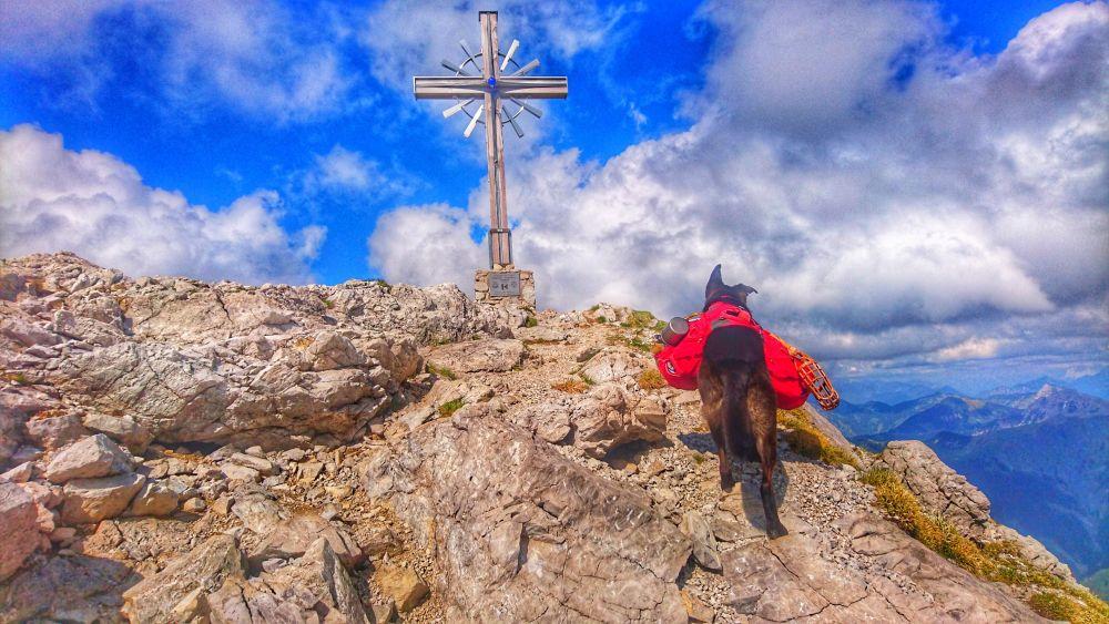 Gipfelsturm mit Hund