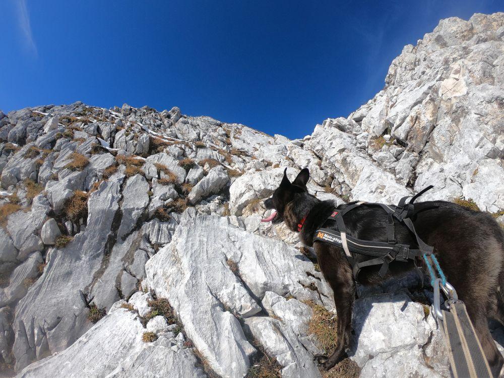 Locker leichte Kraxelei mit Hund zur Arnspitze