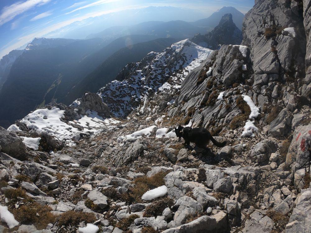 Abstieg mit Hund von der Arnspitze