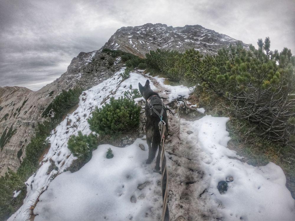 Der Grat des Schwarzenkopfes, im Hintergrund der Gipfelaufbau der Kreuzspitze
