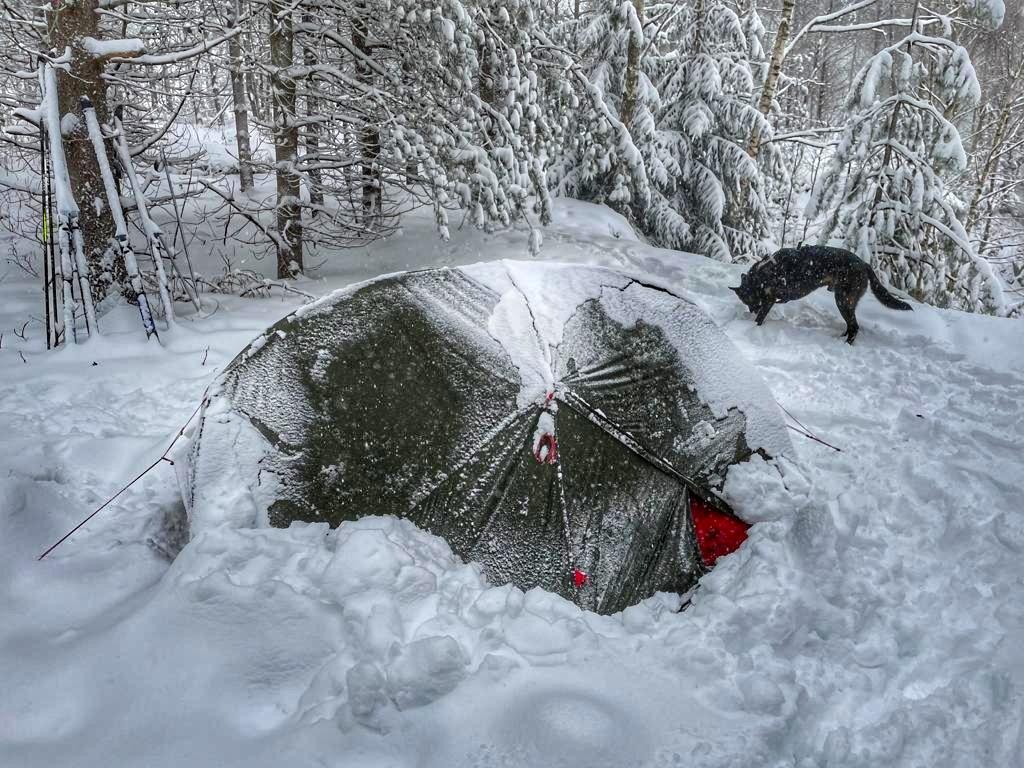 Winterzelten mit Hund