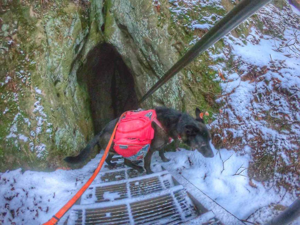 Steile Treppen auf dem Malerweg, nur für geübte Hunde!