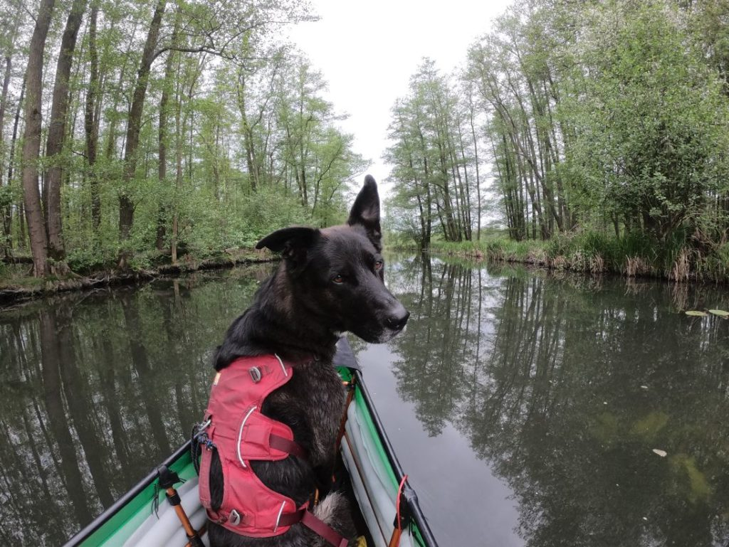 Kanutour mit Hund
