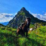 Trailrun auf den Pihapper mit Hund