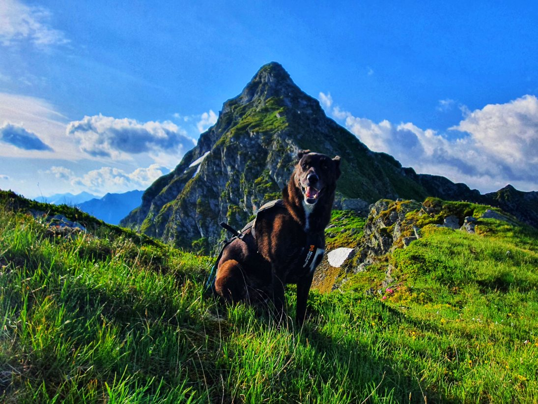 Trailrun/Bergtour mit Hund: Pihapper 2518 m in den Hohen Tauern