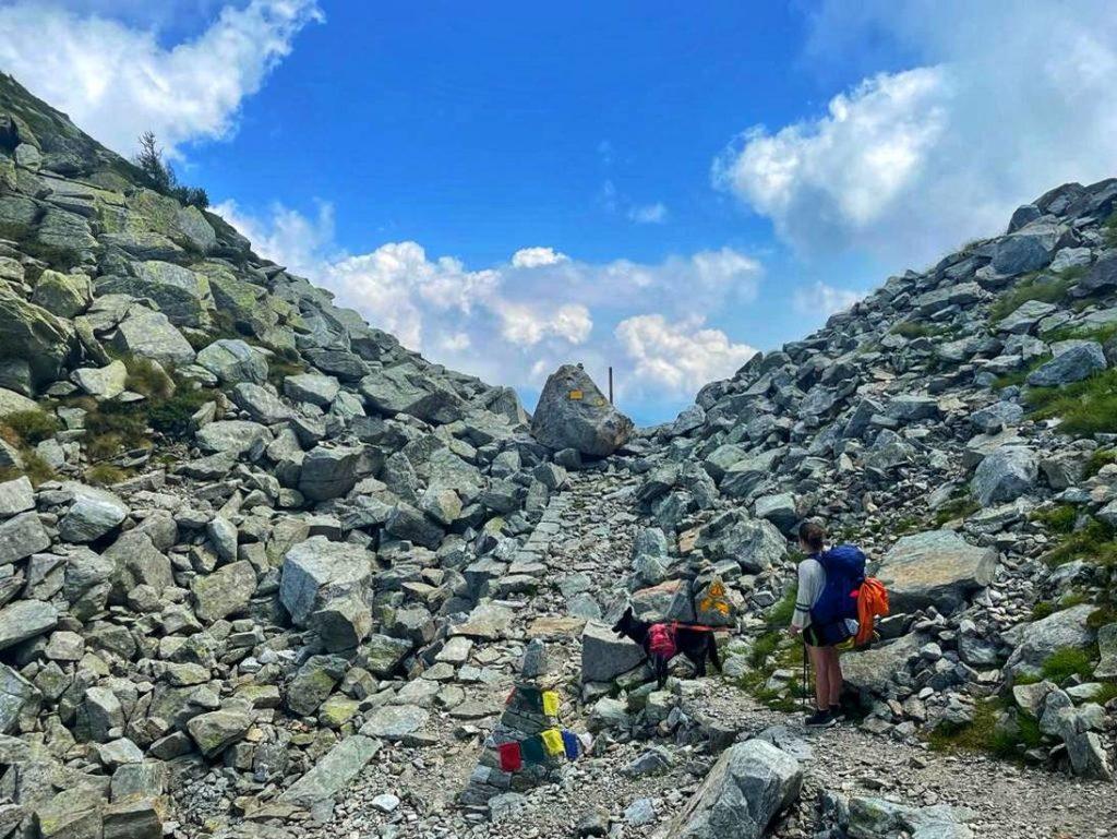 Von einem Pass zum nächsten- Trekking mit Hund auf dem Aostatal Höhenweg