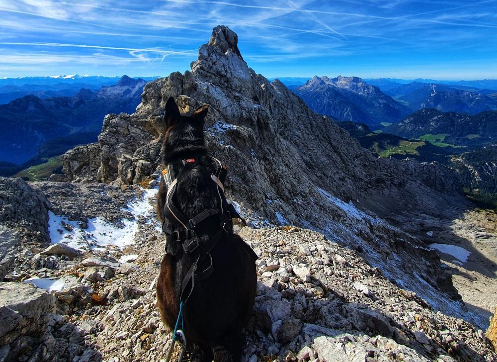 Bergtour mit Hund – Hocheisspitze in den Berchtesgadener Alpen